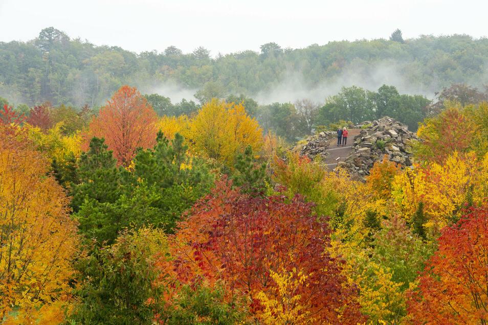 Der sogenannte Indian Summer im Forstbotanischen Garten Tharandt mit Blick vom Aussichtsturm.