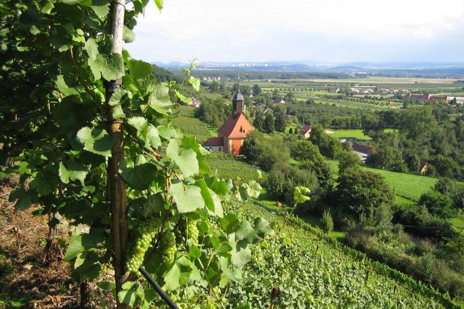 Rund um den Pillnitzer Weinberg wird am Wochenende gefeiert.