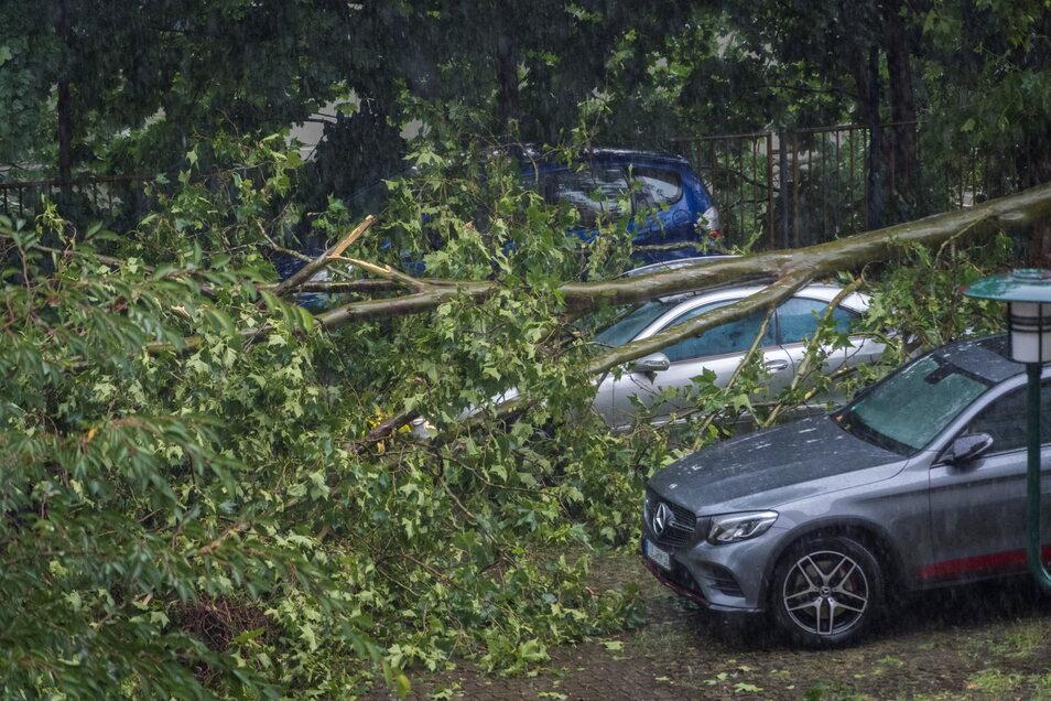 Auf einem Parkplatz am Puschkinplatz knickte ein Baum um und stürzte auf ein Auto.