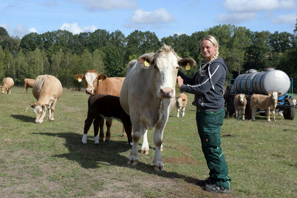 Haben Weibliche Kühe Hörner
