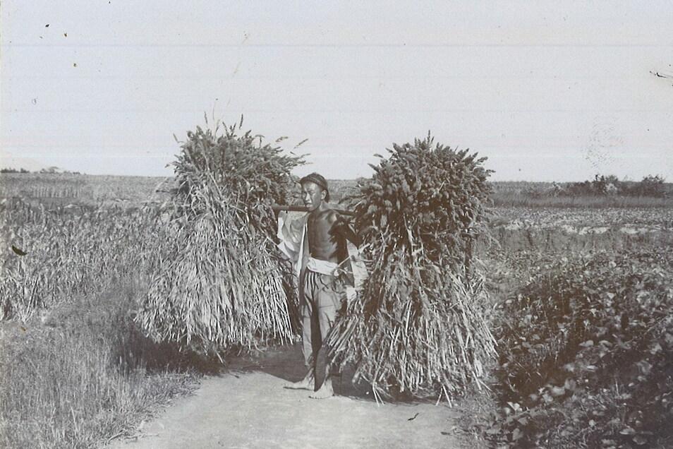 Ebenfalls im Erinnerungsalbum von Karl Kockisch zu finden: Aufnahme eines chinesischen Bauern, der seine Ernte einträgt.