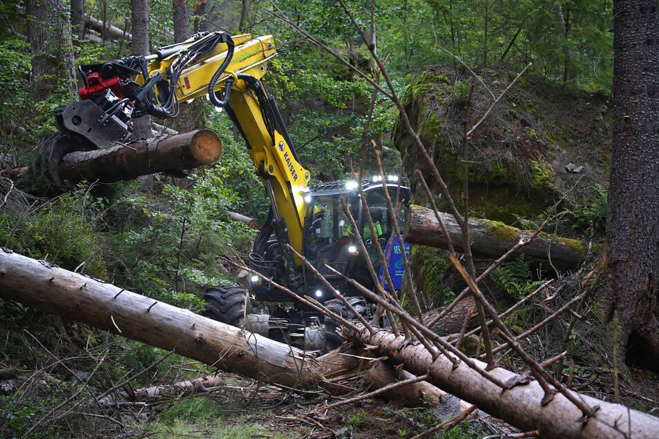 Schreitbagger im Borkenkäferwald der Sächsischen Schweiz. Der Nationalpark testet, ob die Technik hierzulande einsetzbar ist.