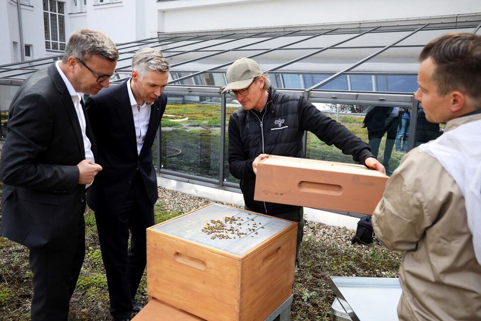 Von links nach rechts: Die beiden Volksbank-Vorstände Markus Ziron und Kai-Uwe Schulz lassen sich von Jens und Tino Ebert das Innere der Bienenbeute zeigen, die nun auf einem Flachdach am Volksbank-Gebäude steht.