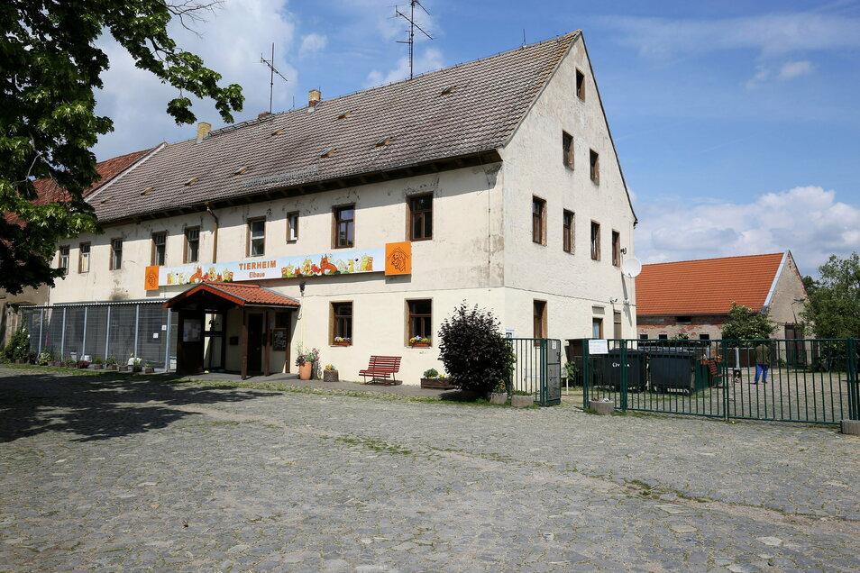 Das Riesaer Tierheim in einer Aufnahme von 2019. Damals gehörte das Objekt noch der Stadt. Dass inzwischen der Tierschutzverein Riesa und Umgebung die Immobilie sein Eigen nennt, macht Tierheim- und Vereins-Chef Uwe Brestel froh.
