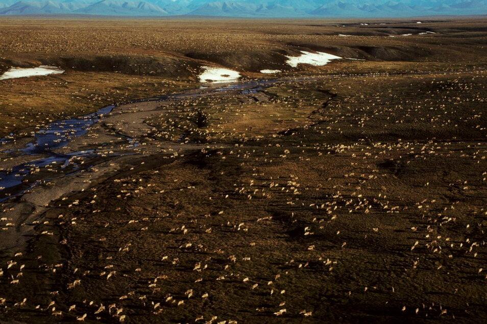 Das Gebiet im Norden Alaskas ist unberührte Wildnis, Heimat für Eisbären und Karibus.