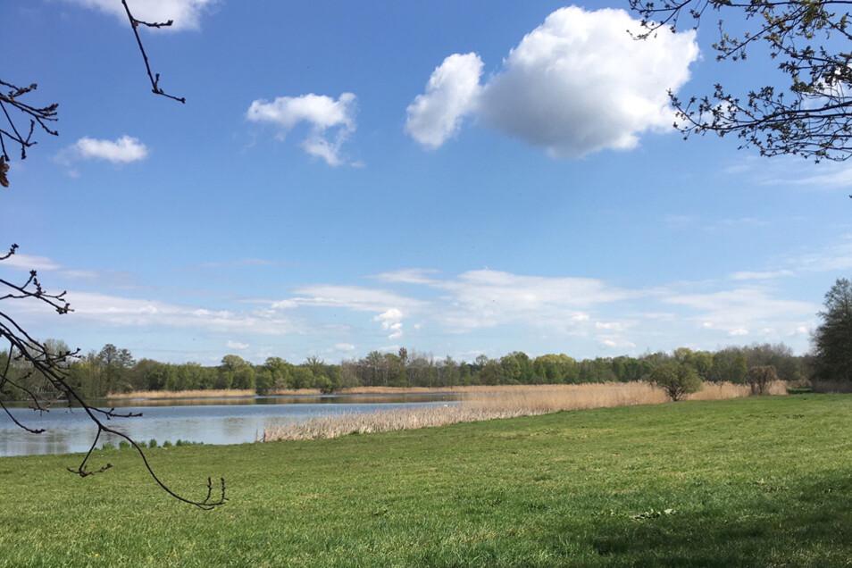 Zahlreiche künstlich angelegte Seen wie der Holschaer Teich sind typisch für die Region.