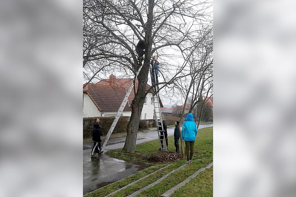 Jugendliche halfen mit, in Reinersdorf zehn Nistkästen aufzuhängen.