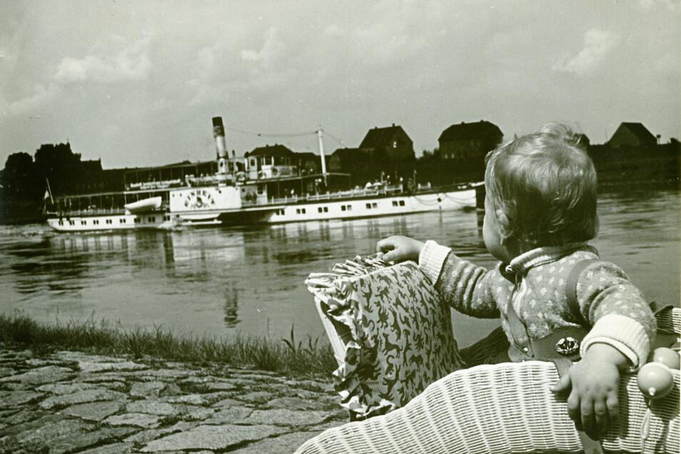 """Das waren noch Zeiten: Bis Anfang der 90er fuhr die Weiße Flotte auch noch Riesa an. Hier ein Archivfoto, das die 1983 verschrottete """"Einheit"""" vom Riesaer Stadtpark aus gesehen zeigt, im Hintergrund Promnitz."""
