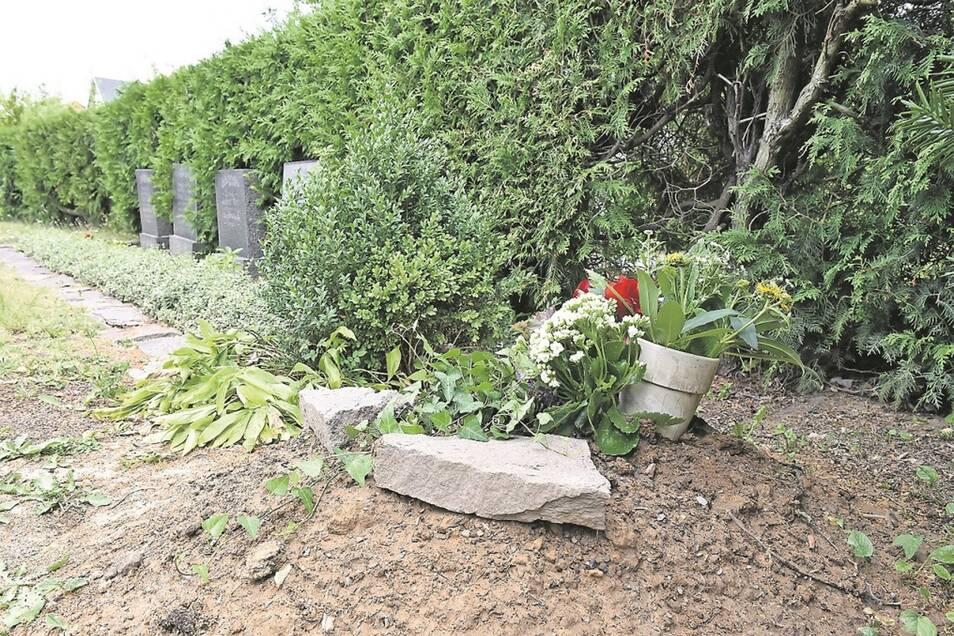Die Gebeine der beiden durch Kopfschuss hingerichteten Soldaten ruhen seit Anfang Juni neben den Kinderkriegsgräbern des Kreischaer Friedhofs.