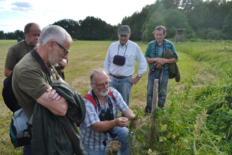 Botanik-Experte Dietrich Hanspach mit Nabu-Exkursionsteilnehmern im vorigen Jahr an der Radener Runze.