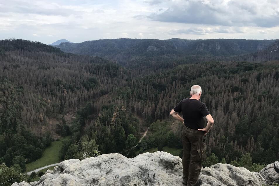 Ein Wanderer blickt vom Teichstein in den Großen Zschand Richtung Böhmen: Die Fichten sind flächendeckend braun. Der Wald wie wir ihn kennen, wird verschwinden.