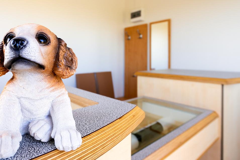 Noch sitzt der Hund in der Rezeption. Ab Mai bewacht er die Hundedusche.