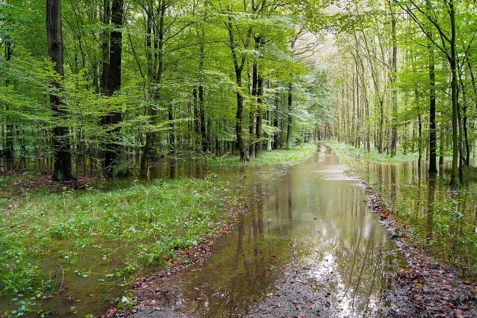 Überflutungen sind wichtig für den Röderauwald bei Großenhain. Naturschützer sehen das jetzt durch einen Wegebau des Landkreises Meißen gefährdet.