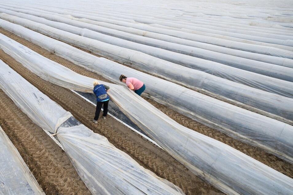Zwei Mitarbeiterinnen für den Spargelanbau spannen in Diehra-Zehren mit Tunnelstäben eine Folie über einen Spargeldamm.