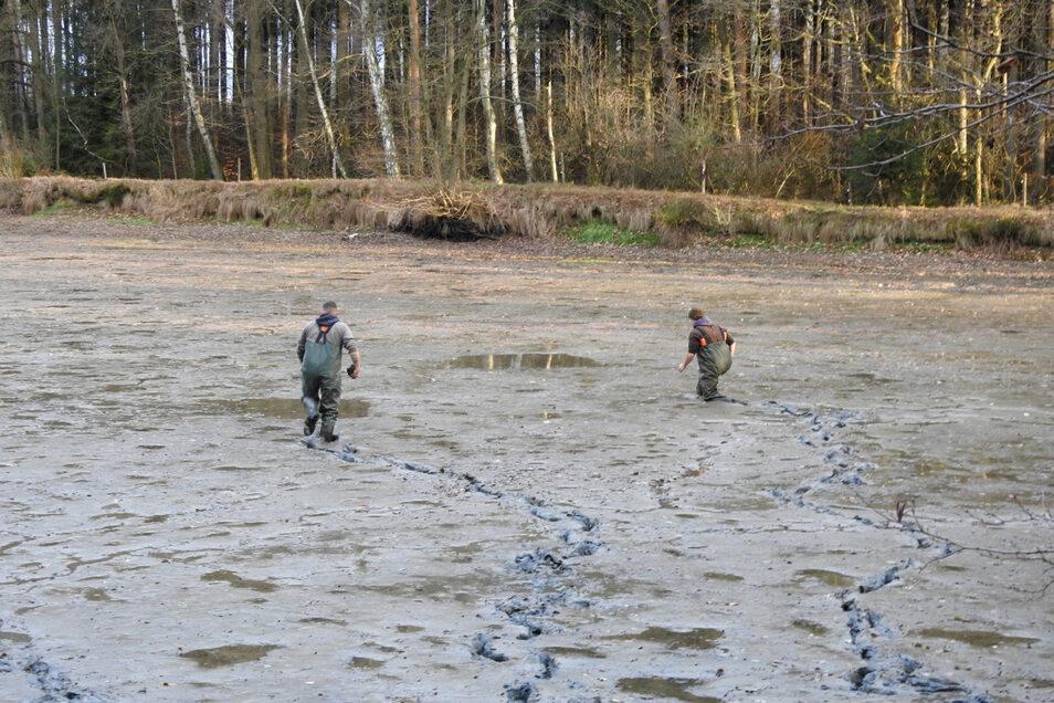 Der Nabu widerspricht Vorwürfen, er habe sich nicht um die Muscheln gekümmert. Mitglieder des Anglerverbandes suchten Anfang Dezember 2018 im hohen Schlamm den Teich nach Muscheln und Fischen ab.