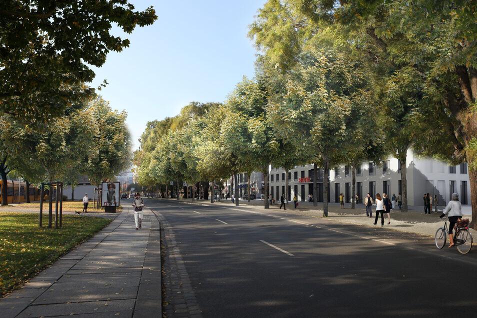 Zwischen dem Dresdner Rathaus und der Altmarktgalerie sollen Dresdner und Touristen bald zwischen Baumreihen flanieren können.