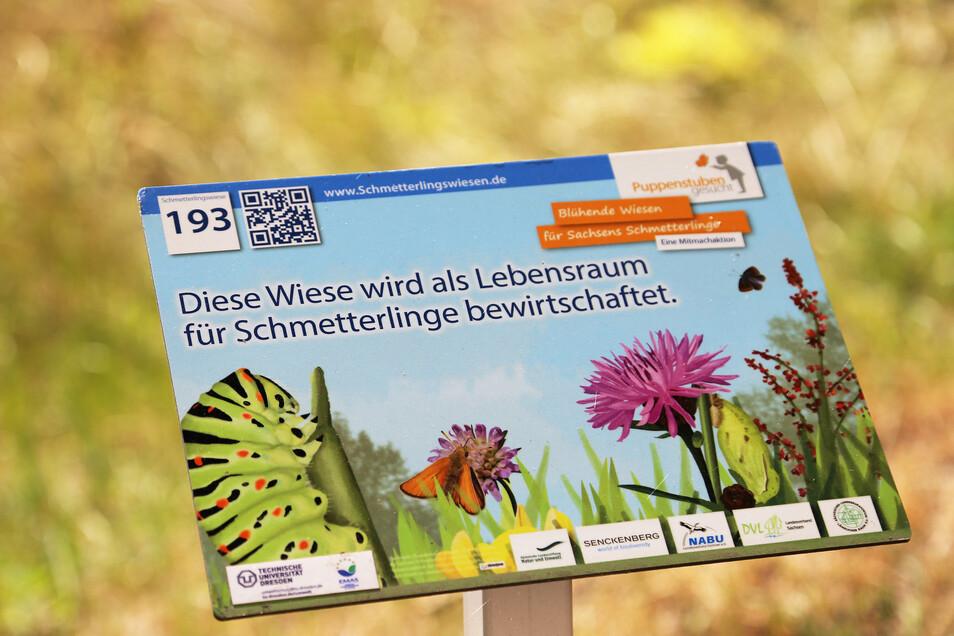 Damit die fleißigen Helfer sich in den Beeten wohlfühlen, hat die TU Dresden eine Schmetterlingswiese als zusätzlichen Lebensraum für die Insekten eingerichtet.