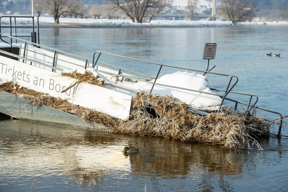Flutmüll vom Hochwasser vor einer Woche an der Dampferanlegestelle in Radebeul-Kötzschenbroda. Der Elbepegel stagniert derzeit bei unter drei Metern. Die Gründe für nicht mehr Abfluss liegen im Tschechischen.