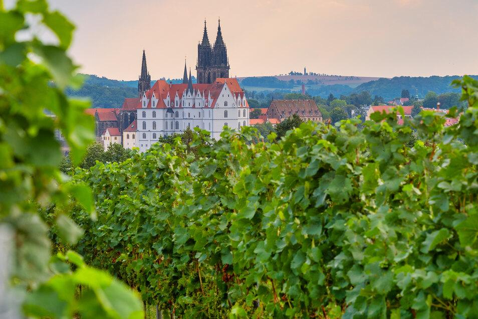 Ein Blick von den Weinbergen auf die Albrechtsburg.