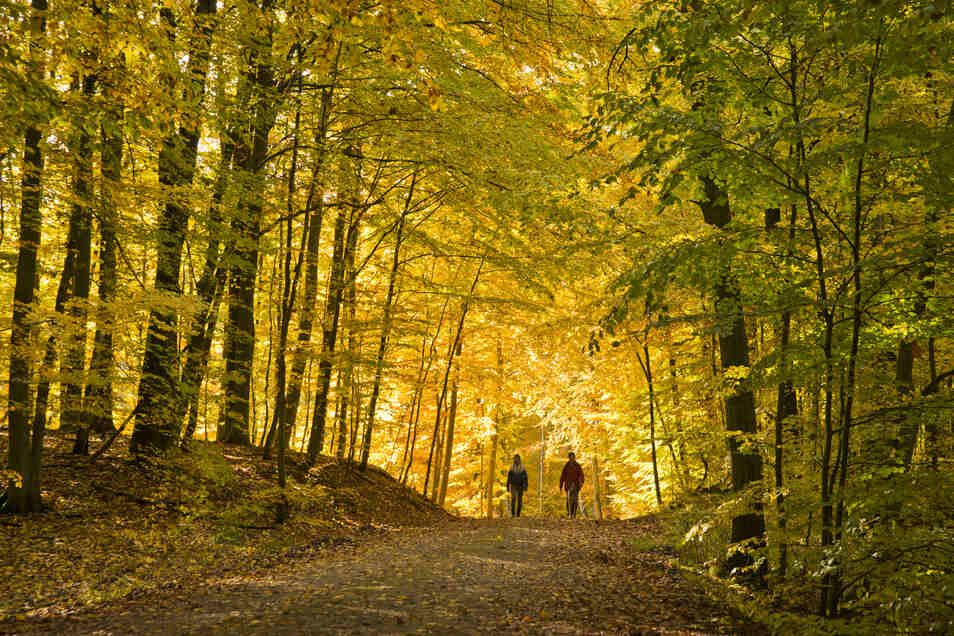 """Laubverfärbung im UNESCO Weltnaturerbe """"Alte Buchenwälder"""" im Müritz-Nationalpark."""