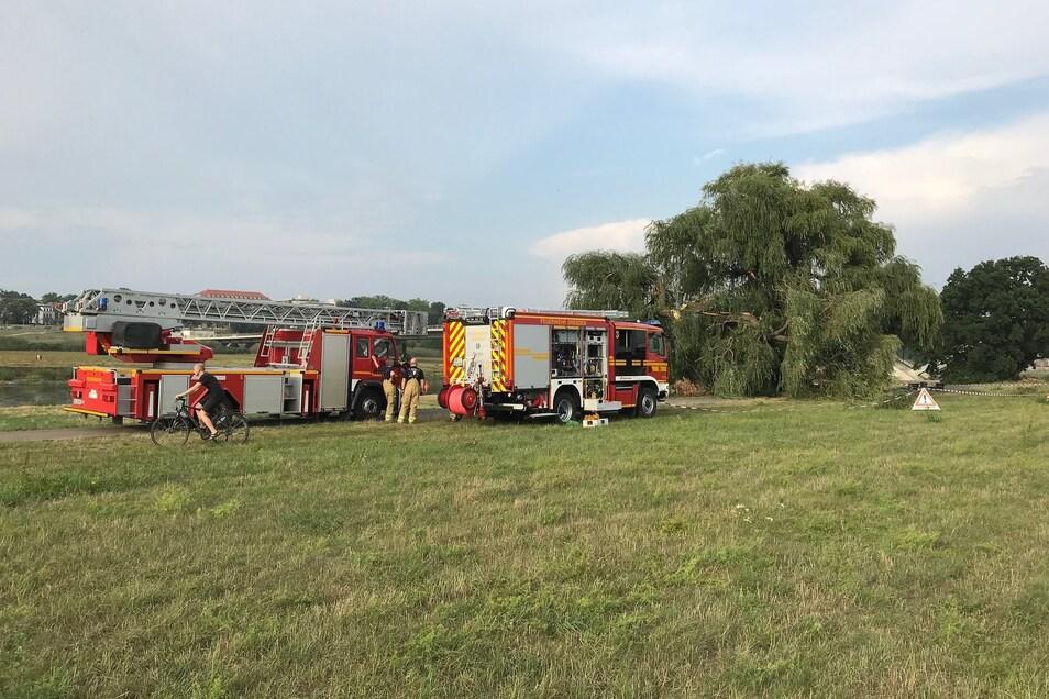 Die Feuerwehr rückte an die Elbe an, um den abgestürzten Baum vom Elberadweg zu schaffen.