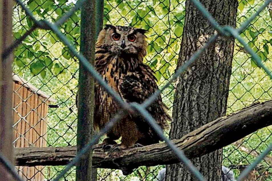 Am Montag will der Tierpark in Weißwasser wieder öffnen - wenn die Infektionslage das hergibt.