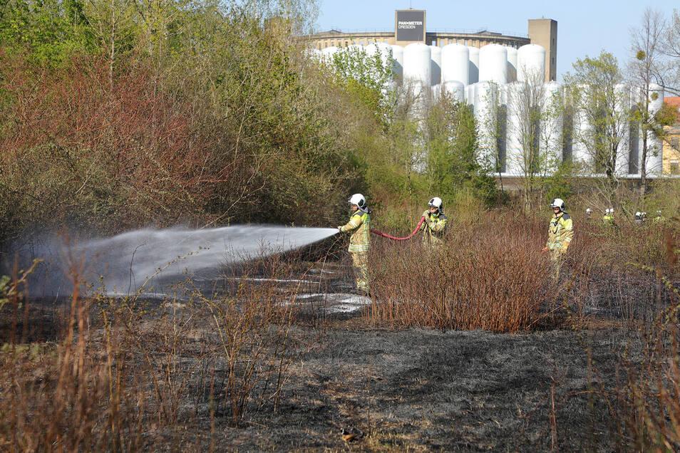 Zwei Fußballfelder groß war die Fläche, die die Feuerwehr löschen musste. Im Hintergrund sieht man das Panometer Dresden.