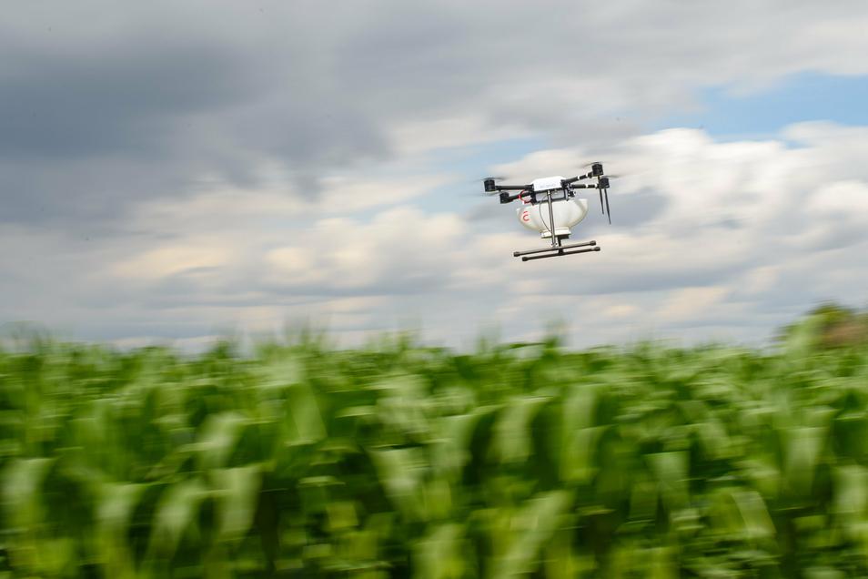 Drohnen erfreuen sich zunehmender Beliebtheit, sorgen mitunter aber auch für Ärger, wie kürzlich in Obergurig, wo sich Anwohner gestört fühlten. Was ist eigentlich erlaubt?