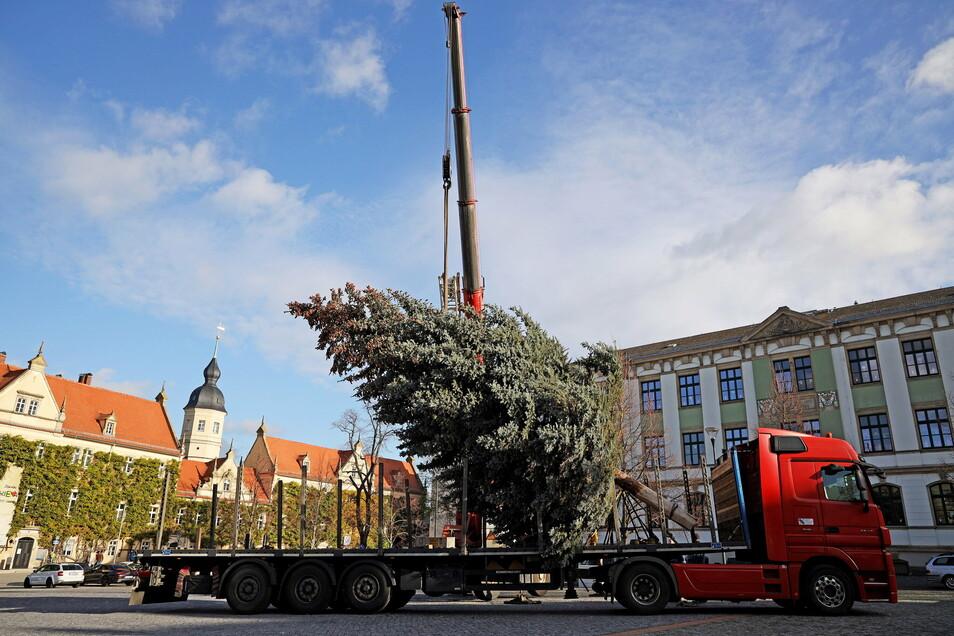 Zwischen Rathaus (l.) und 1. Grundschule hat der Riesaer Weihnachtsbaum 2020 seinen Platz gefunden. Sonst steht er hinter dem Rathaus.