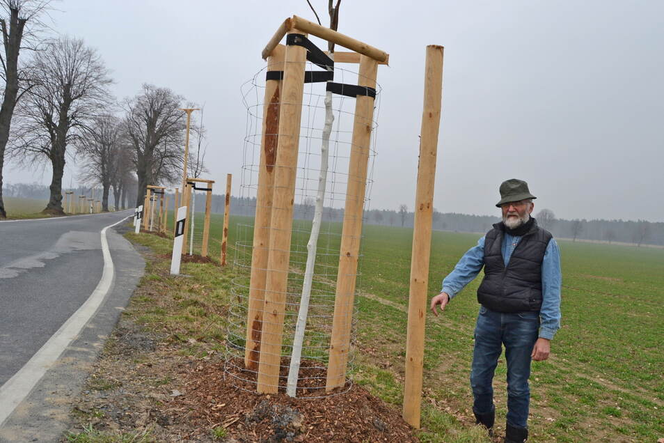 Schutzpfahl für neu gepflanzte Sommerlinden: Lutz Runge vom Nabu kritisiert das sorglose Heranackern mancher Landwirte an die Straßenbäume.