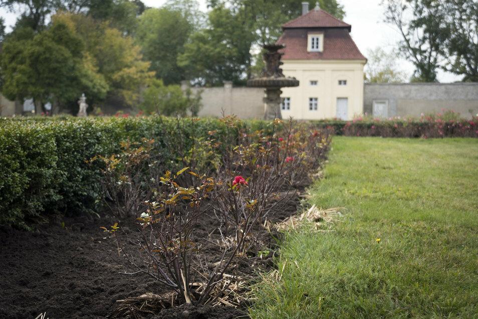 Ein paar Blütenreste im Rosengarten sind noch zu sehen. Die Rosen dort bekommen frische Erde und Dünger. Im Hintergrund: Der – beinahe vollständig – sanierte Wohnpavillon von Gutsbesitzer Henry de Jong.