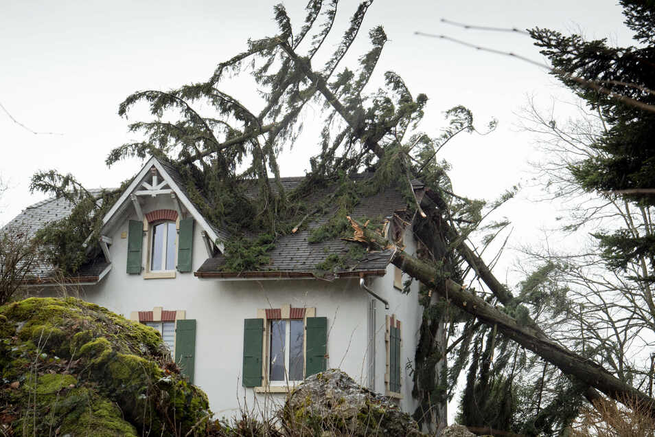Durch den Sturm umgestürzte Bäume können an Häusern schwere Schäden anrichten.