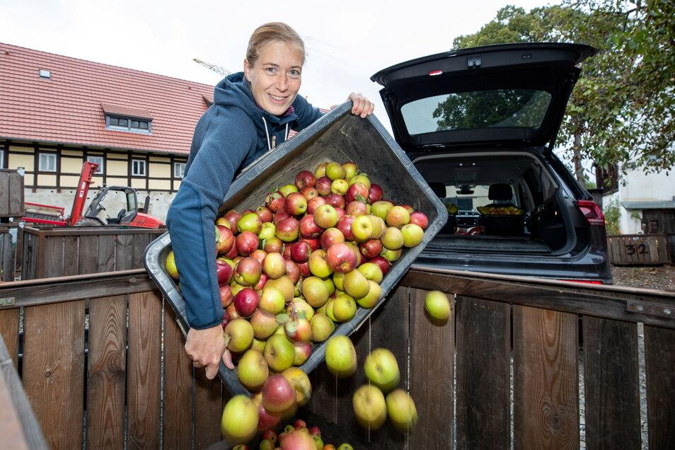 Elisabeth Gläser befüllt bei der Sonntags-Saft GmbH in Possendorf die ihr zugewiesene Kiste mit etwa 120 Kilogramm alter Apfelsorten.