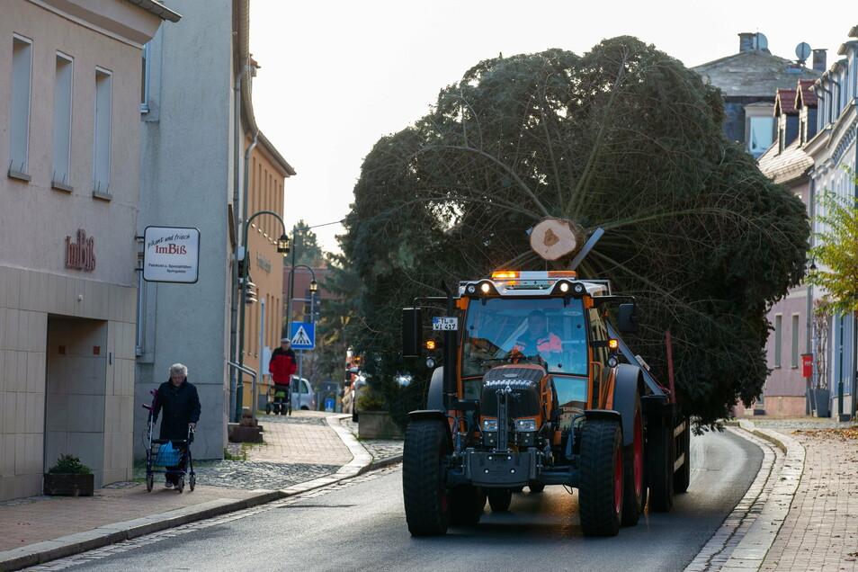 Der Baum wurde am Dienstagvormittag von Kleinopitz nach Wilsdruff transportiert.