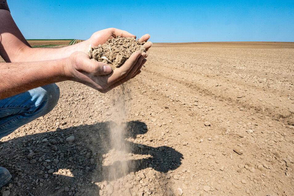 Staubige Böden bis zum Horizont. Die Landwirte befürchten, wieder ein trockenes Jahr vor sich zu haben.