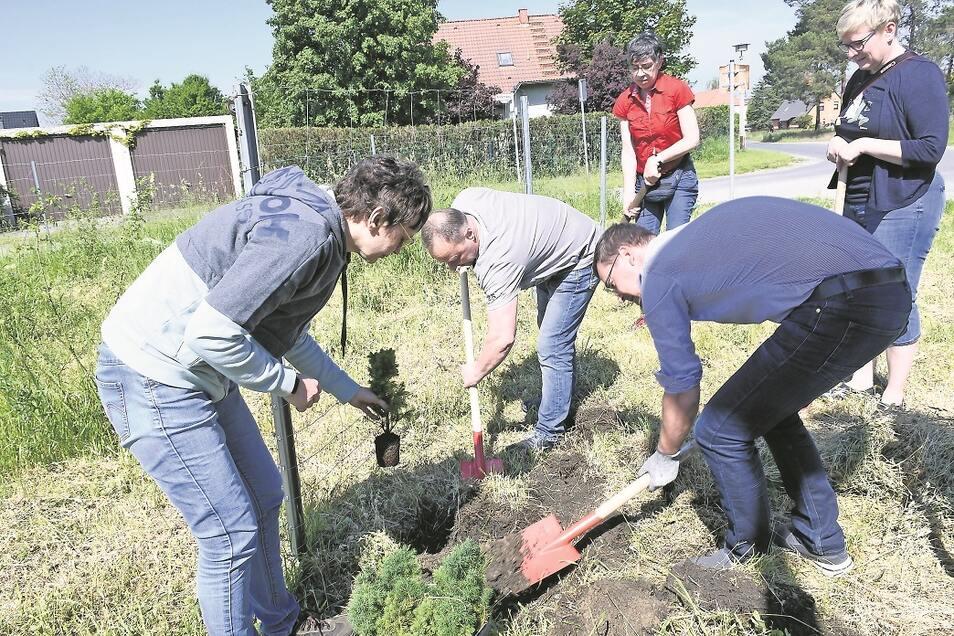 Freiwillige Helfer griffen zum Spaten, um ihren Beitrag zur Aktion 10000 Bäume für die Lausitz zu leisten.