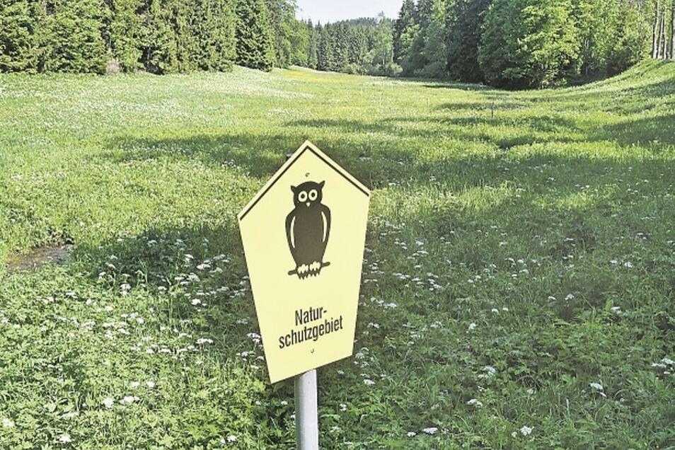 Zahlreiche bedrohte Pflanzenarten wachsen im Gimmlitztal. Hier gehört zum Naturschutz aber auch regelmäßige Pflege.
