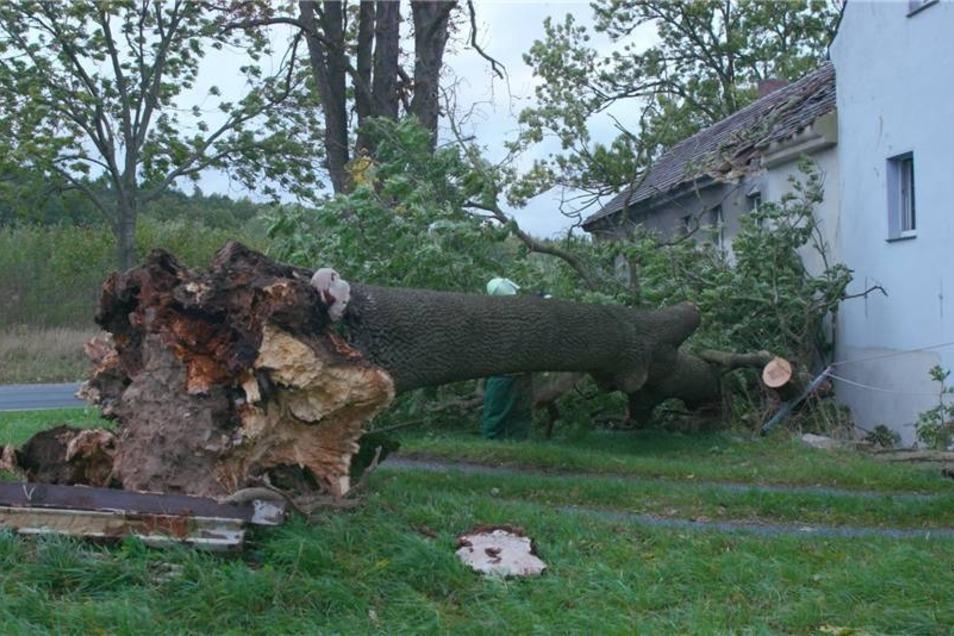 In Liebenau bei Kamenz fiel ein Baum in ein Dach.