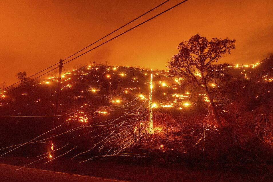 Bäume brennen an einem Hang bei einem Waldbrand in Vacaville. Mehr als zwei Dutzend Waldbrände lodern im US-Bundesstaat Kalifornien.