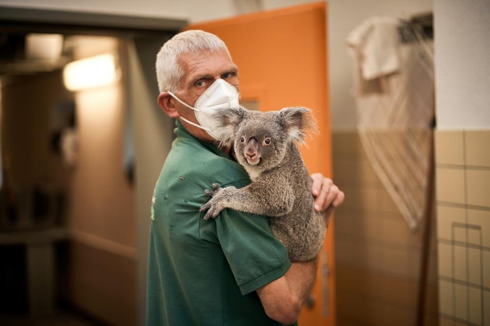 Koalamädchen Sydney sucht ungewöhnlich viel Nähe zu Menschen, weil sie von Anfang an von Pflegern auf den Arm genommen und gefüttert wurde, die ihre 14 Jahre alte Mutter unterstützt haben.