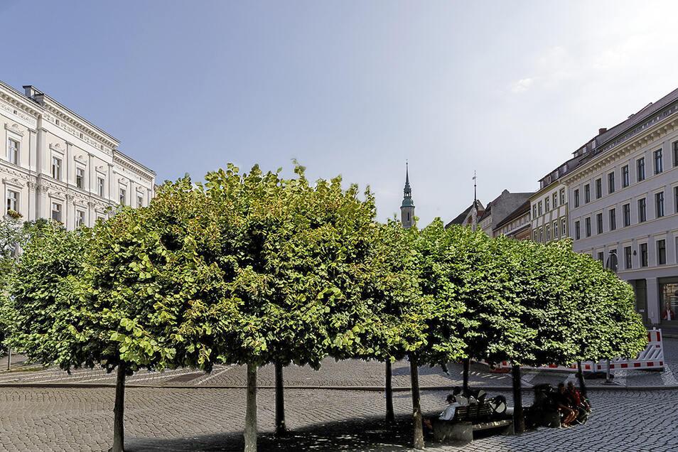 Etwa so wie auf dieser Fotomontage könnte der Görlitzer Obermarkt mit Bäumen aussehen.