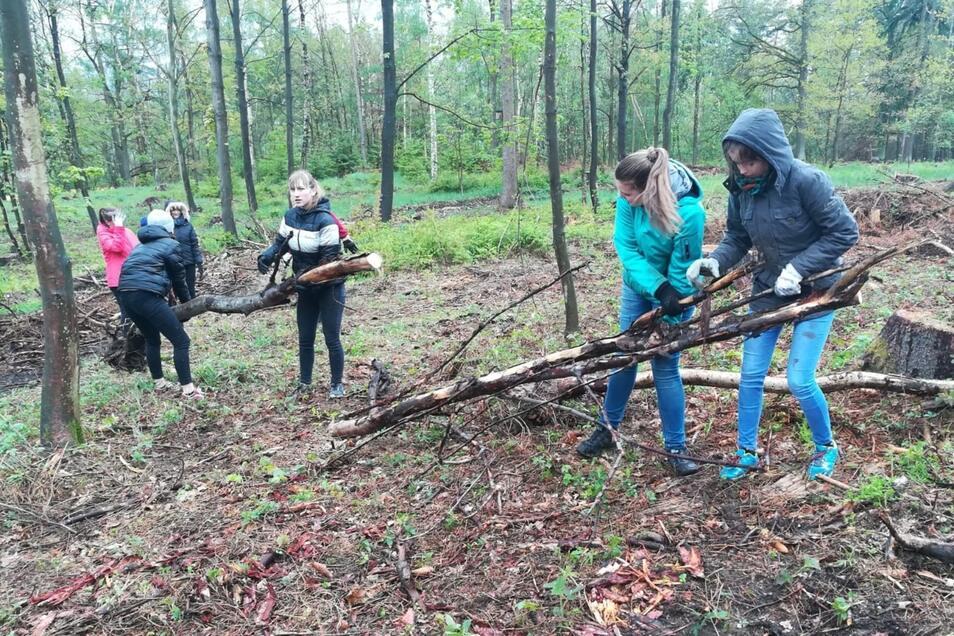 Cunewalder Schüler haben jetzt geholfen, Waldschäden zu beseitigen. Sie entfernten abgestorbenes Holz und pflanzten neue Bäume.