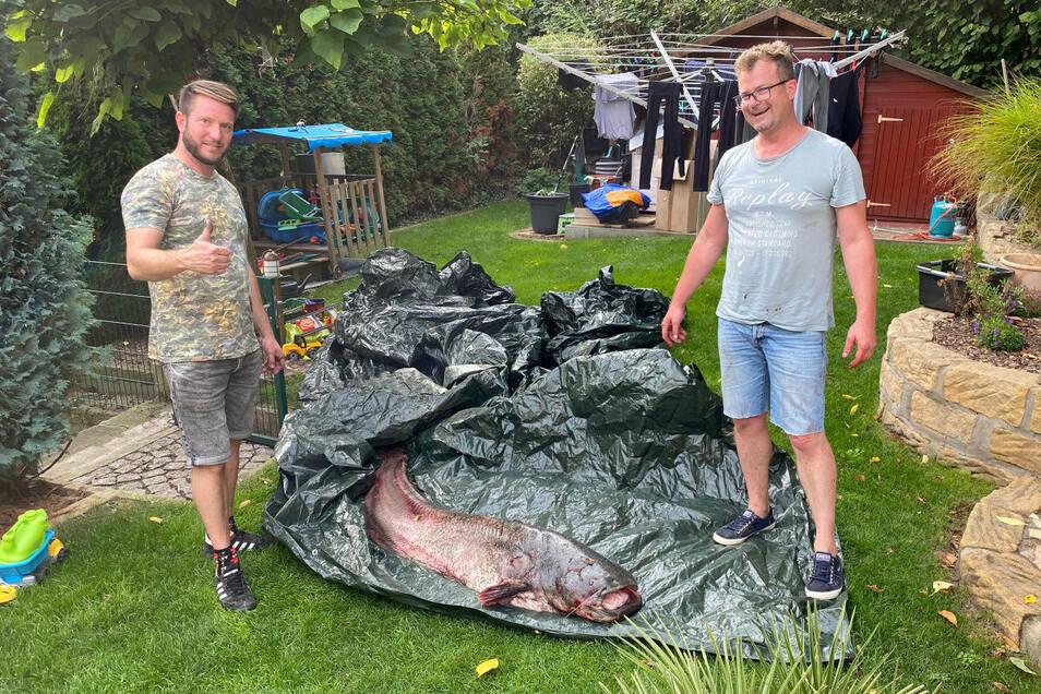 Markus Mönnich (l.) freut sich: Er hat den Riesenwels am Samstag gefangen. Geholfen hat ihm Schwager Christian Bütow.