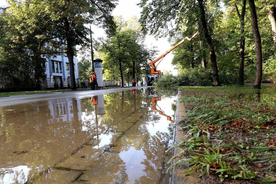 Zwei Bäume fielen dem Wasserrohrbruch zum Opfer.