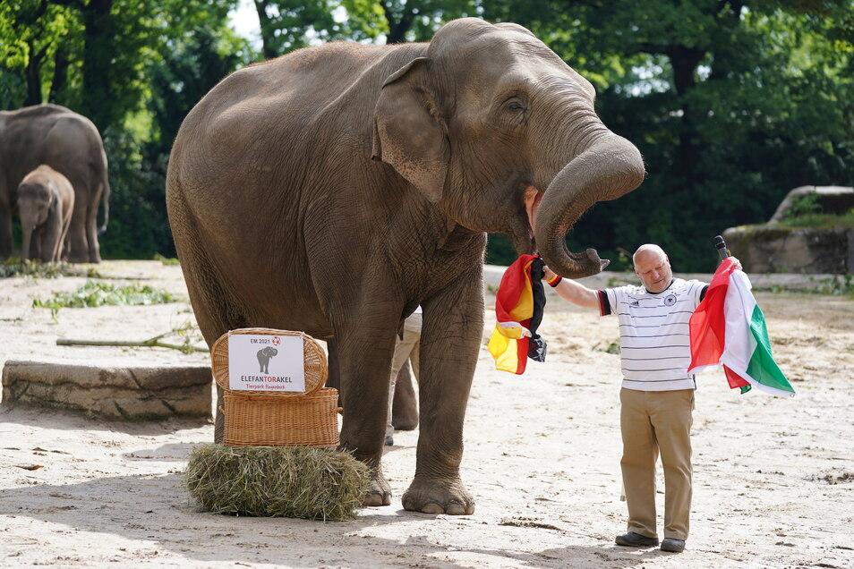 Tierpfleger Michael Schmidt hält neben Elefantenkuh Yashoda die Flaggen von Deutschland und Ungarn hoch. Elefantenkuh Yashoda aus dem Hamburger Tierpark Hagenbeck hatte zuvor beide Flaggen aus einem Weidenkorb gezogen und tippet so auf eine Unentschieden