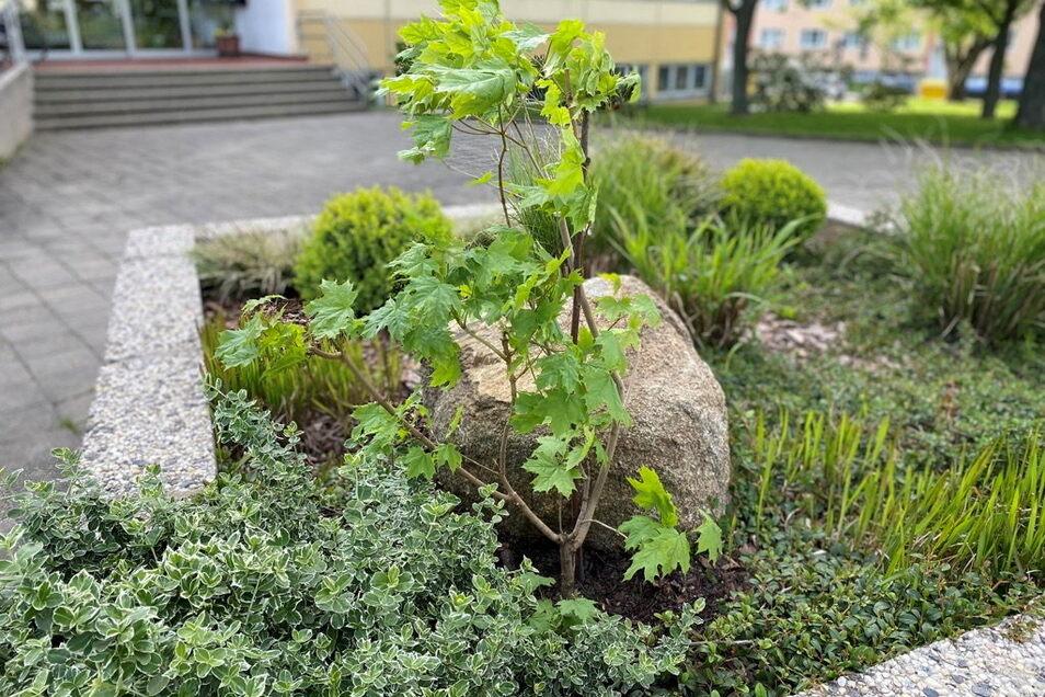 """Auch die Jüngsten beteiligen sich: Vor dem """"Förderschulzentrum Mira Lobe"""" in Königshufen halfen Schüler beim Pflanzen."""