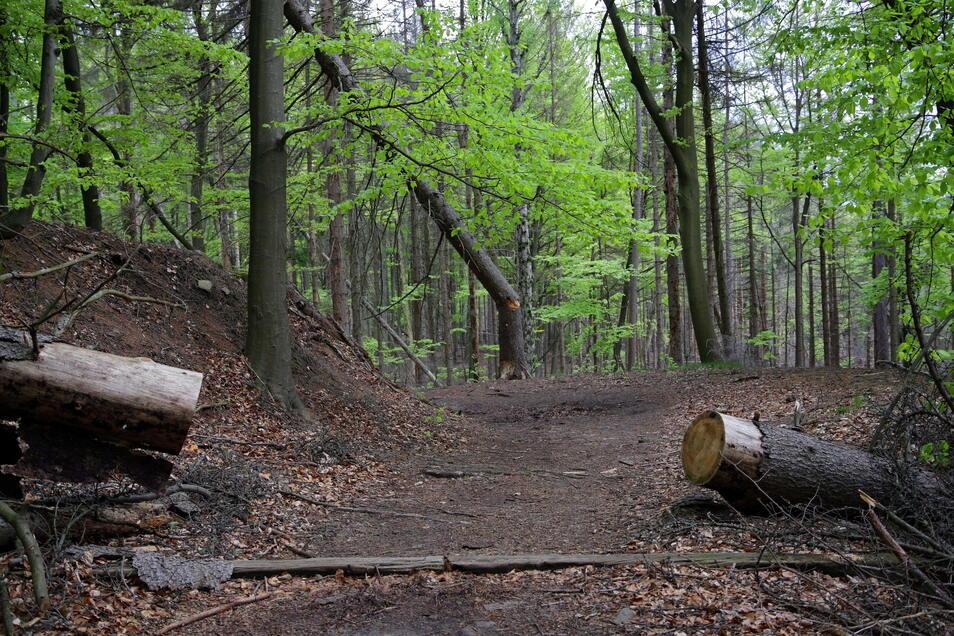 Malerweg am Roßsteig: Hier wurde schon gesägt, um den Weg freizuhalten, doch es brechen immer neue Bäume nach.