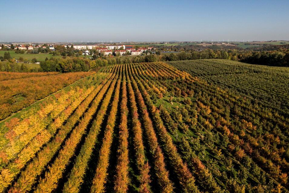 Auf rund 1.500 Hektar bauen die Tochterunternehmen der Obstland Dürrweitzschen AG zwischen Grimma, Oschatz und Döbeln Obst an. Der Jahresertrag liegt bei durchschnittlich 40.000 Tonnen Obst. Hauptsächlich geerntet werden Äpfel, jetzt aber auch noch Erdbee