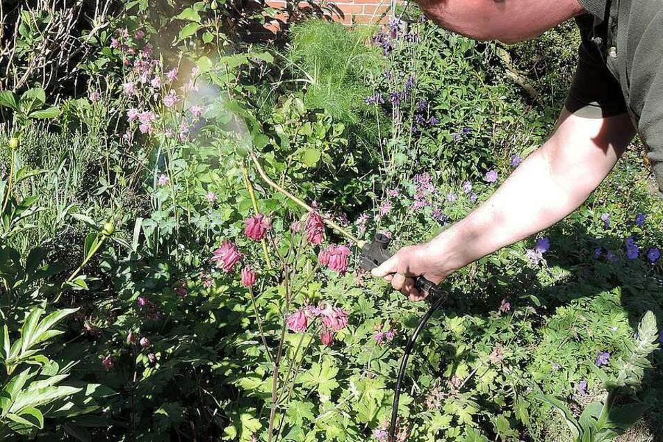 Mit einem biologisch wirksamen Stärkungsmittel gelingt es leichter, einen üppig grünenden Garten mit gesunden Pflanzen anzulegen.