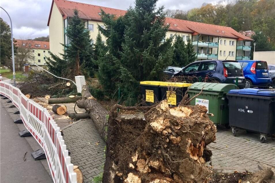In Heidenau wurde ein Baum auf der Rosa-Luxemburg-Straße entwurzelt.